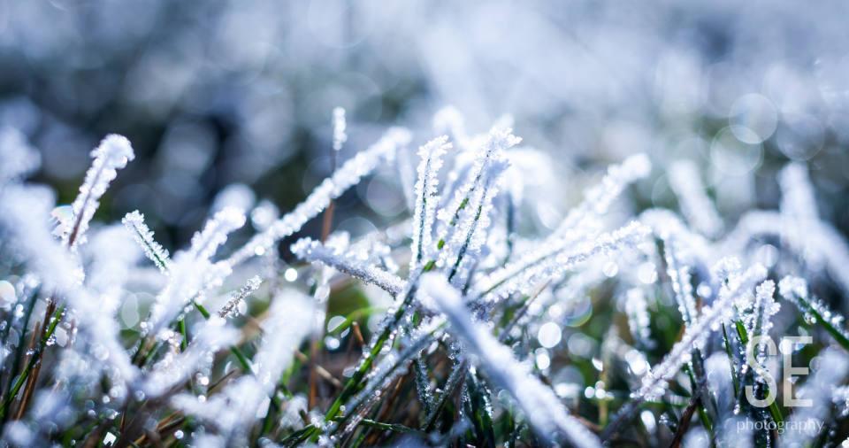Frozen Garden - Stefan Eber - Photography