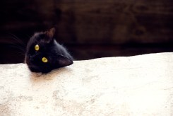 Black cat peering over a wall