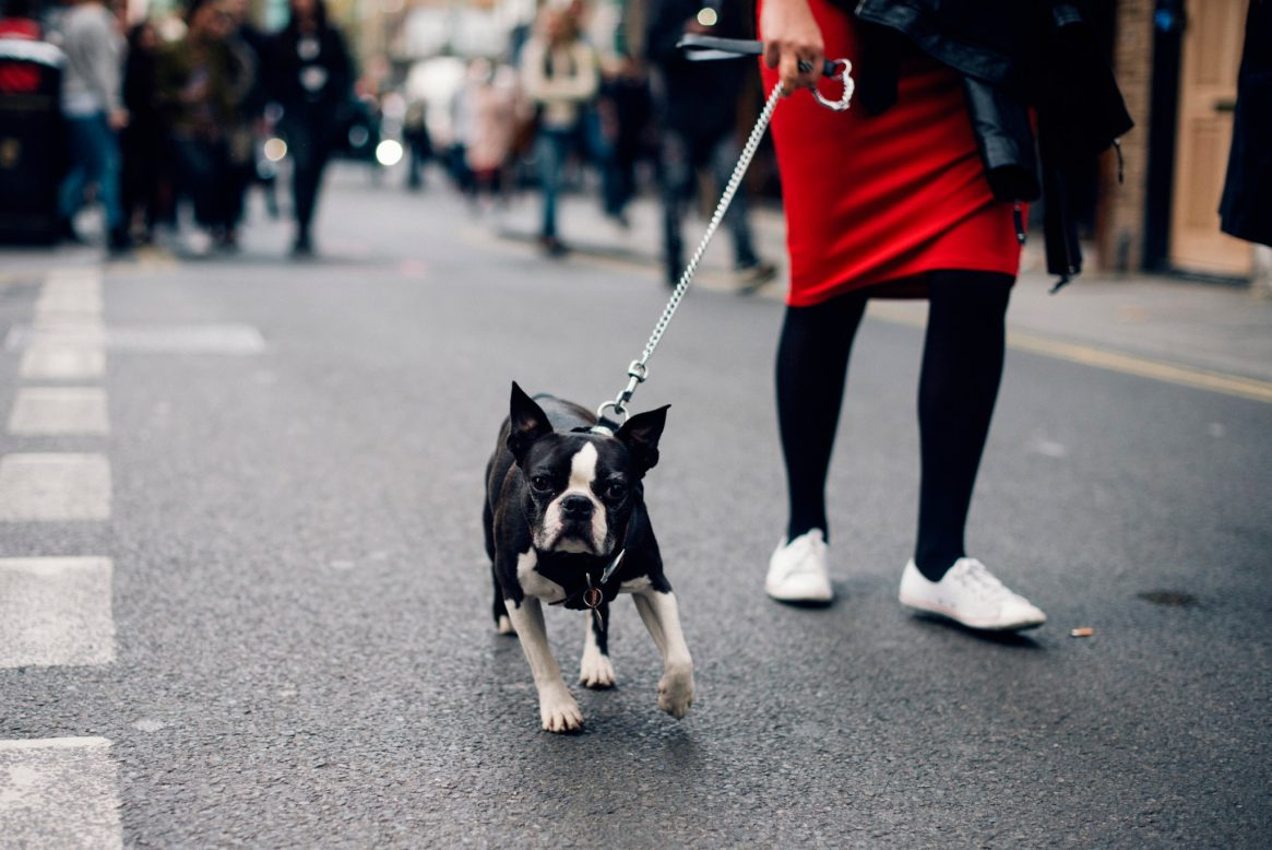 A black and white French bulldog walks on a leash held by its owner who's wearing black stockings and white shoes on Brick Lane in London