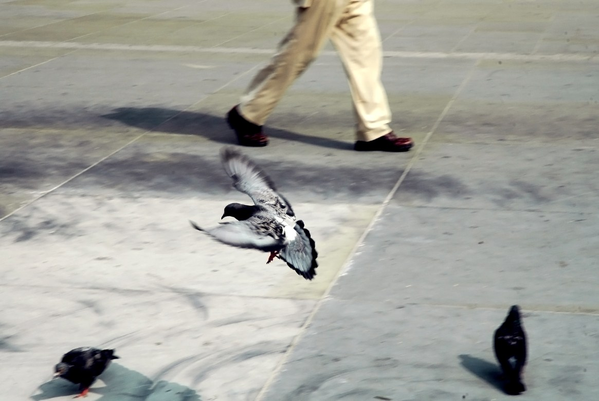 A pigeon comes in to land, with the legs of a passer by in the background