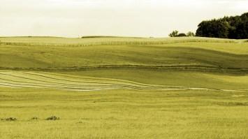 Meaningless Landscape (warped) 2, 2015