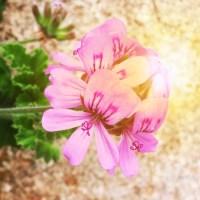 Wunderschöne Sommerzeit - Bildbearbeitung mit der App ColorStory
