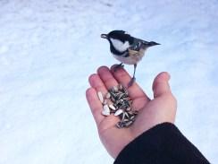 bird_pontresina