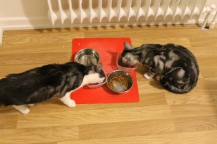 Food brings the sisters together without hissing
