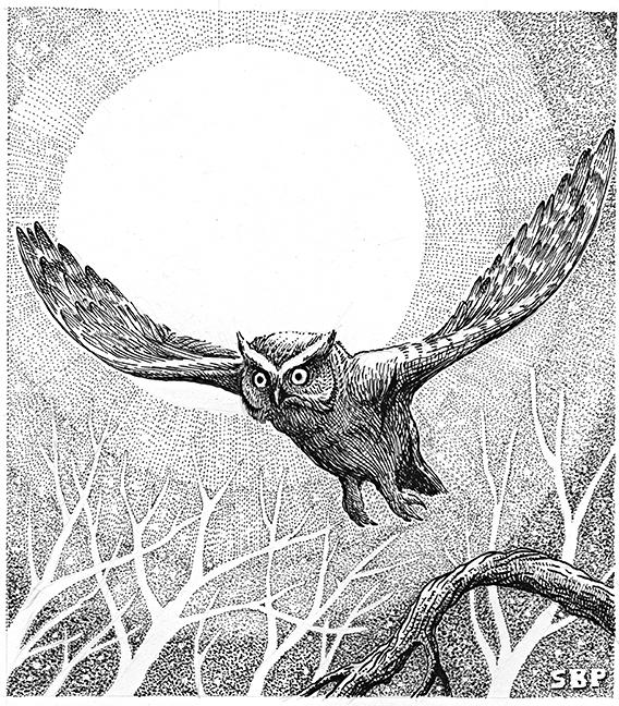 owl for judy 72dpi