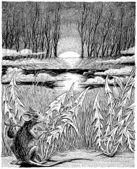ba mouse at pond v2 i (2)