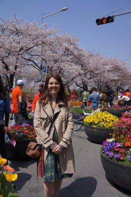 Kirschblüte und weitere schöne Blumen