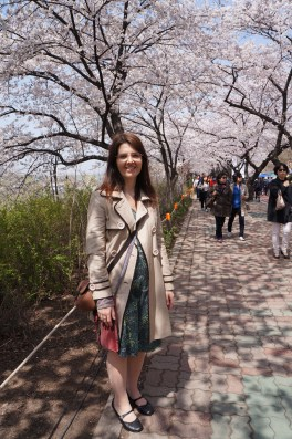 Kirschblüten in Seoul