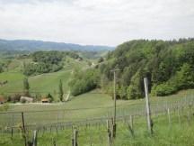 Landschaft Weinwanderweg Südsteiermark