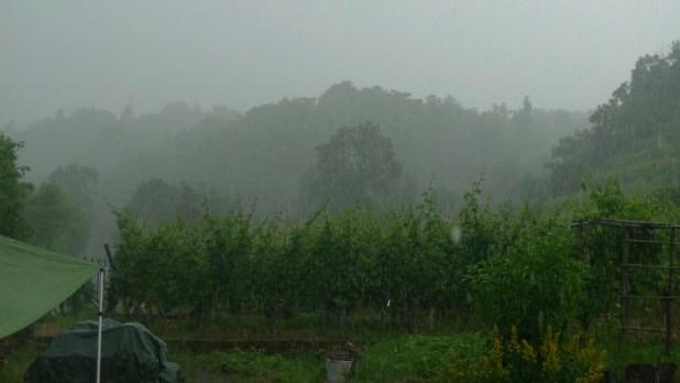 Regenschauer überm Steilen Zucker