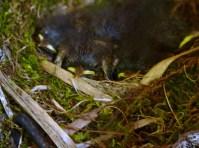 Kuscheliges Nest