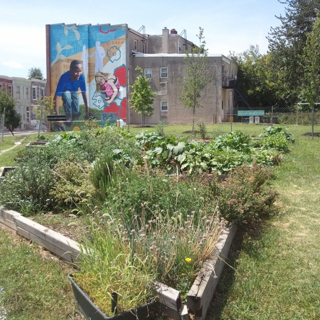 Clearing vacant housing in Baltimore to make way for community gardens