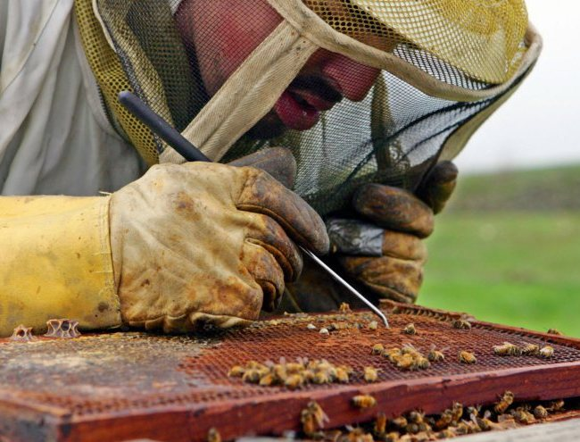 Why Bees Are Dying