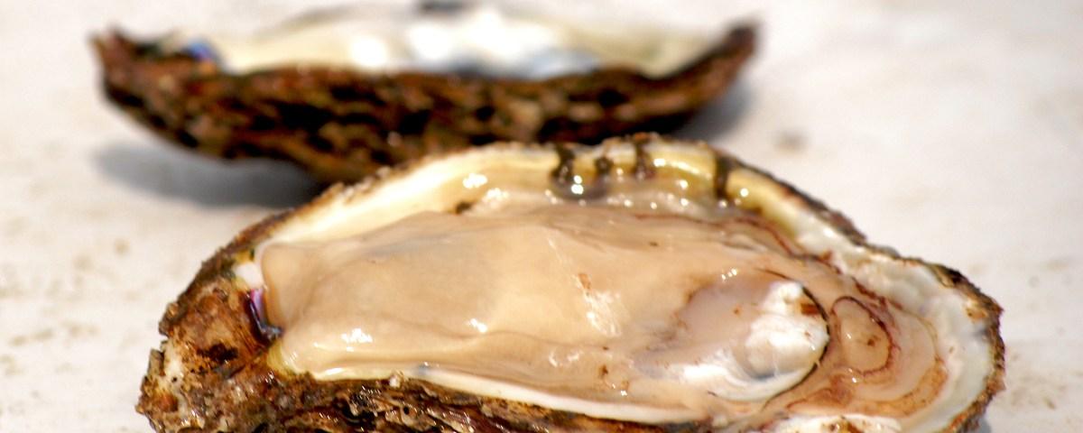 Oysters, Photo Credit: chesbayprogram via Compfight
