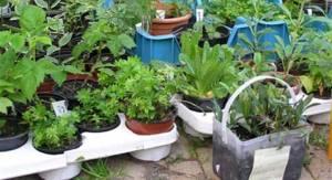 plantemarked