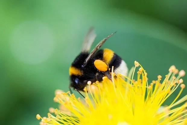 Μα πού πήγαν όλες οι μέλισσες;