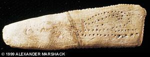 Blanchard bone marks lunar cycles
