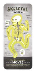 skeletal system by rachel ignotofskyjpg