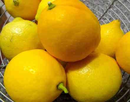 Lemon Bars 2