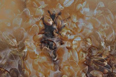 Image, 'Grain Weevil' by Eleanor Gates-Stuart