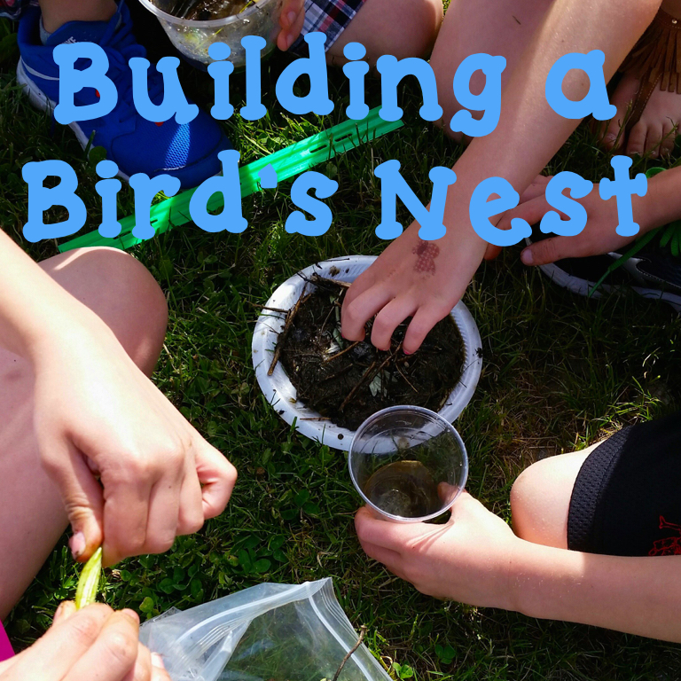 Spring STEM:  Building a Bird's Nest