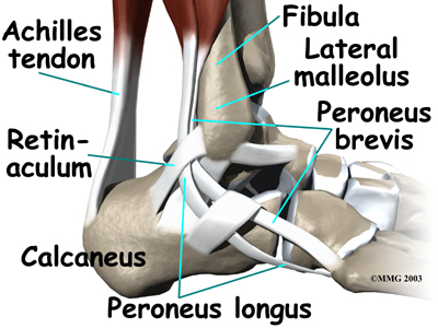 ankle_peroneal_tendinitis_anat01
