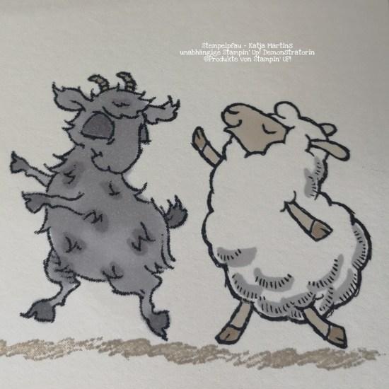 Ziegenbock trifft auf Schaf