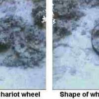 The Chariot Wheels of the Enemy / Terrorists fear snakes and bees