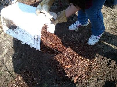 Putting the mulch in