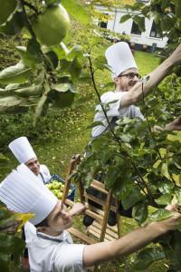 På Bühlmann tilbereder man menuen efter årstidens råvarer – og så vidt mulige lokale, og her helt lokale nemlig med æblerne fra Hotel Scheelsmindes imponerende park. (På billedet ses fra venstre kokkeelev Nicolai Neess Hansen, kreativ kok Dennis Carlsen og souschef Søren Tønnesen).
