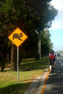 2013.05.05 - Дорожный знак с коалой из Австралии - Аркадий Мацех
