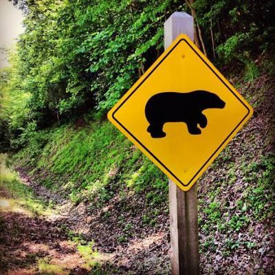 2013.05.30 - Дорожный знак с медведем в Вирджинии, США - Sign in Primland in Meadows of Dan, VA (Andi Perullo de Ledesma - mybeautifuladventures.com)