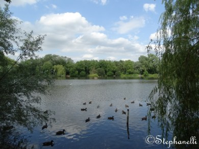 First view of the lake - looking lovely with all of this years youngsters nearly grown up!