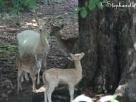 Deer!!!!