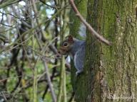 Nervous Squirrel