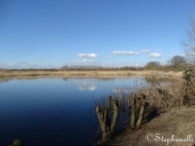 Wigeon Pond