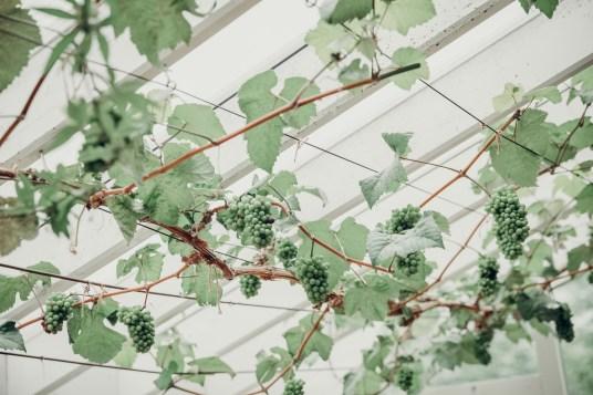 meriandtommy-stephanie-louise-green-photography-weddings-8