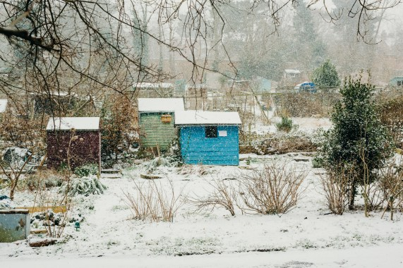 oscar-bigboots-stephanie-louise-green-pet-photography-photographer-in-north-london-n7-n8-highgate-crouchend-hampstead-muswell-hill-cute-dog-in-snow-winter-patterdale-collie-terrier-7