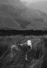 stephanie-green-wedding-photography-lake-district-patterdale-village-white-lion-old-english-pub-cumbria-23