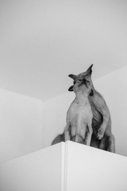 stephanie-green-weddings-modern-family-portrait-pet-family-dog-sphynx-cat-contemporary-london-uk-101