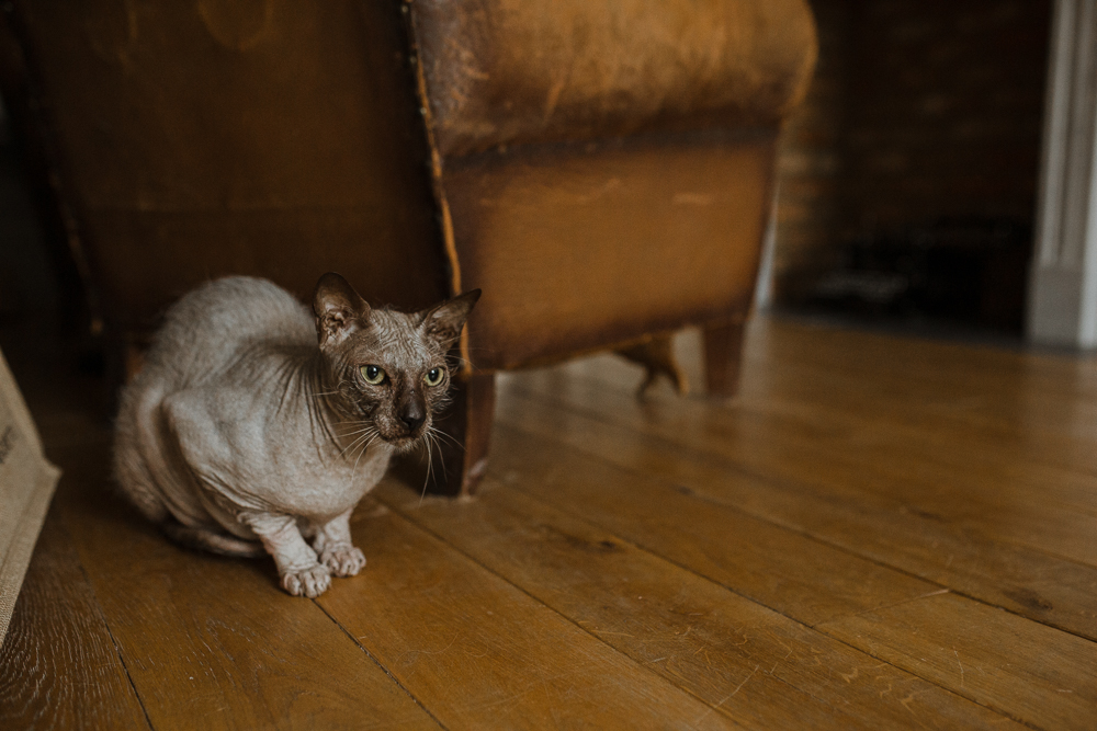 stephanie-green-weddings-modern-family-portrait-pet-family-dog-sphynx-cat-contemporary-london-uk-17
