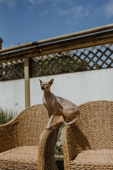 stephanie-green-weddings-modern-family-portrait-pet-family-dog-sphynx-cat-contemporary-london-uk-79