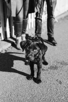 stephanie-green-weddings-puppy-portrait-ryan-jyothi-chocolate-lab-dog-pawtraits-walthamstow-london-5