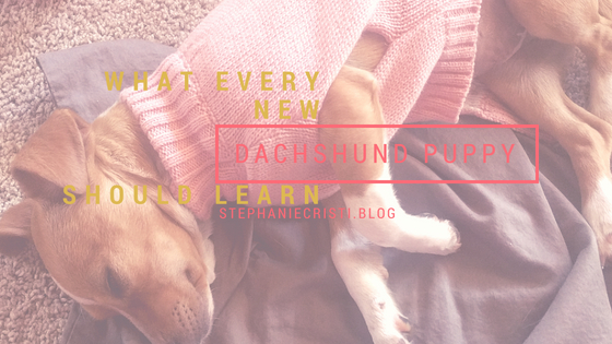 This StephanieCristi blog article tells about the writer's experience adopting and training a four month old dachshund mix puppy.