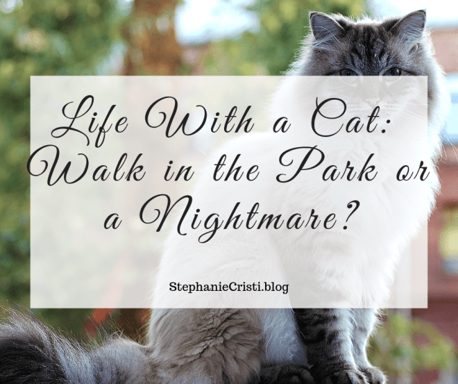 Are you considering life with a cat? StephanieCristi details the pros and cons of cat ownership as she has experienced it with her two purr babies.