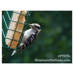 #woodpecker #PTCYL