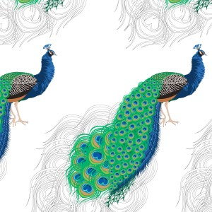 StephanieDesbenoit-poster-birds-peacock-white-1