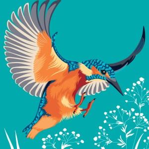 StephanieDesbenoit-wallpaper-birds-kingfisher-blue-0