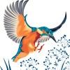 StephanieDesbenoit-wallpaper-birds-kingfisher-white-0