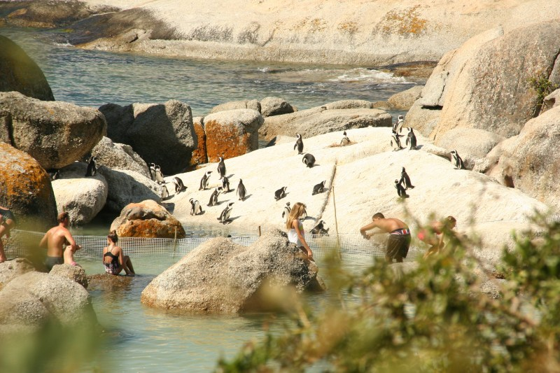 10 beaches in the western cape worth visiting